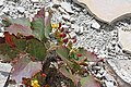 2015.05.24 13.43.59 IMG 2360 - Flickr - andrey zharkikh.jpg