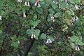 2016.05.28 09.55.22 IMG 6054 - Flickr - andrey zharkikh.jpg