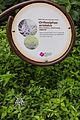 2016 Singapur, Ogrody botaniczne (192).jpg