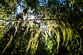 2017-06-24 Cathedral Grove (36609106746).jpg