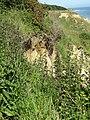 2018-06-30 Trimingham cliffs and beach (3).JPG