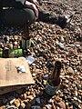 20190224 Brighton Beach Beer.jpg