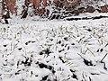 20191130 北京大雪4.jpg