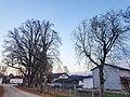 20201129 ND 3Winterlinden in Haiming2.jpg