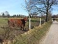 23 Suchsdorf 28.jpg