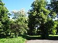 617683 A 683 Krakow Krzesławice Wankowicza 25 park w zespole dworsko parkowym 02.JPG
