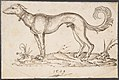 A Greyhound in Profile Facing Left MET DP803224.jpg