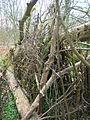 A deadwood shelter.JPG