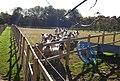 A flock of sheep^ - geograph.org.uk - 1025164.jpg