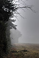 A foggy morning in Chaldon, Caterham (7301514258).jpg