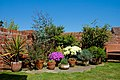 A garden near Scarborough-10 (4629716596).jpg
