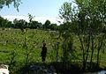 A graveyard in Afghanistan.jpg