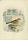 A history of the birds of Europe (Pl. 682) (6989241204).jpg