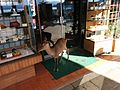 A hungry deer, Miyajima (15712099217).jpg
