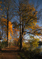 A walk by the pond, Reigate (8229490278).jpg