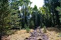 Abineau Trail is a steep 1,800 foot climb over two miles up the slopes of the San Francisco Peaks through Abineau Canyon. The trail meets the Waterline Trail at the top, which can be followed down to (22059097665).jpg