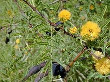 Foglie, fiori e frutti della pianta