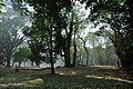 Acharya Jagadish Chandra Bose Indian Botanic Garden - Howrah 2011-01-08 9750.JPG