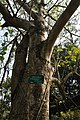 Acharya Jagadish Chandra Bose Indian Botanic Garden - Howrah 2011-01-08 9867.JPG