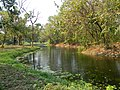 Acharya Jagadish Chandra Bose Indian Botanic Garden - Howrah 2011-03-20 2025.JPG