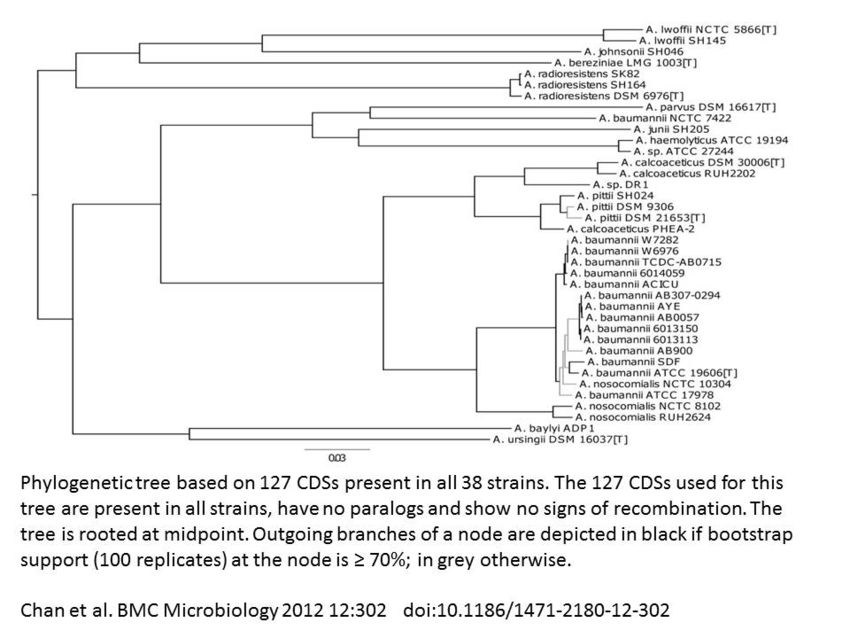 Phylogenetic Tree of the Acinetobacter Genus based on conding DNA sequences. Chan et al. 2012