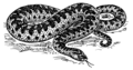 Adder (PSF).png