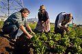 Africa Food Security 14 (10665092094).jpg