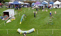 Agility Field Left Side: A Competition Agility Field Showing (clockwise  From Lower Left) A Tunnel, The Dogwalk, The Judge Standing In Front Of A  Winged Jump ...