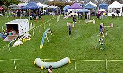 Dog Training Run Newtownabbey