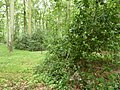 Ahrenshooper Holz - geo.hlipp.de - 11987.jpg