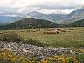 Albania pasture.jpg
