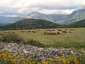 A pasture in Southern Albania