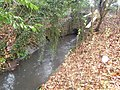 Alder brook - geograph.org.uk - 629894.jpg