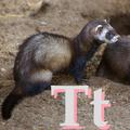 Alfabet zwierząt - literka T.png