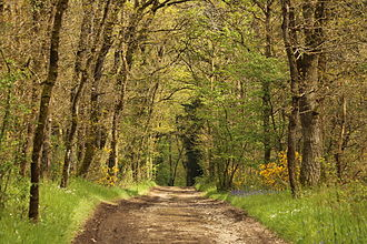 Amayé-sur-Orne - A Walking Path in Spring