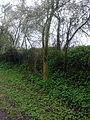 Ancien tracé du vicinal à Grez-Doiceau 005.jpg
