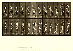 Animal locomotion. Plate 291 (Boston Public Library).jpg