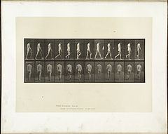 Animal locomotion. Plate 549 (Boston Public Library).jpg