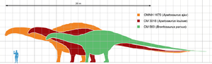 Apatosaurus scale mmartyniuk wiki.png