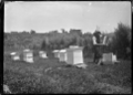 Apiary belonging to A P Godber at Silverstream, 1921. ATLIB 288139.png