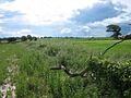 Arable Land - geograph.org.uk - 469629.jpg