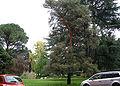 Arboreto sperimentale firenze.JPG