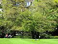 Arboretum Zürich 2012-04-26 13-52-10 (P7000).JPG