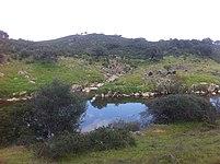 Ardila - panoramio.jpg