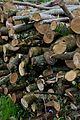 Armadale Castle - wood pile.jpg
