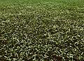 Artificial grass .jpeg