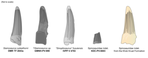 Comparison diagram of five spinosaurid teeth
