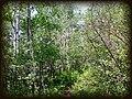 Aspen Forest at Vega Reservoir - panoramio.jpg