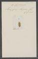 Aspidosoma - Print - Iconographia Zoologica - Special Collections University of Amsterdam - UBAINV0274 025 04 0022.tif