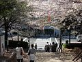 Asukayama Park, -April 2009 a.jpg